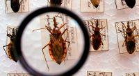 Doença de Chagas: 110 anos de negligência