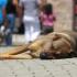 Casos de abandono de animais aumentam em Belo Horizonte